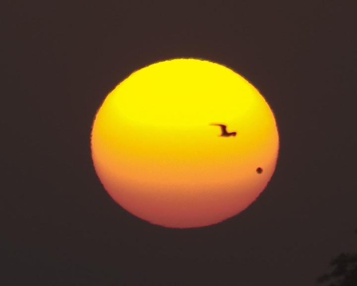[Venus transit 2004 from Chicago. Copyright  2004 by Bill Arnett]